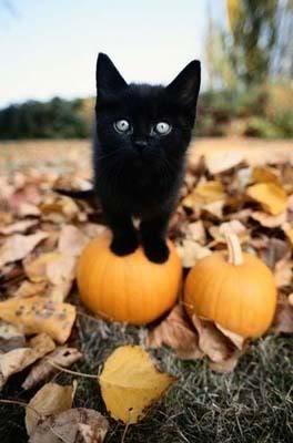 samhain-kitty